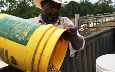 Banks Fight $4 Billion Debt Relief Plan for Black Farmers